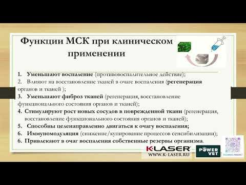 Екатерина ВИКТОРОВА: Применение стволовых клеток при лечении лошадей