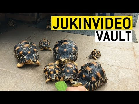 Reptile Dysfunction || JukinVideo Vault
