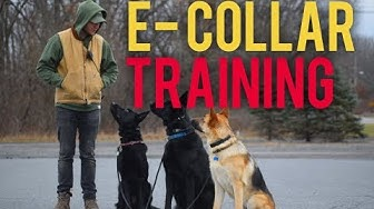 How to safely use the E Collar- Dog training with America's Canine Educator