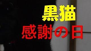 【黒猫感謝の日】【黒猫】のみなさん出番ですよ~ thumbnail