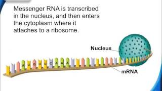 12-3 The Genetic Code and Translation