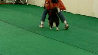 Performance by Border Collie Lucy in her 4th appearnace at dog danc...