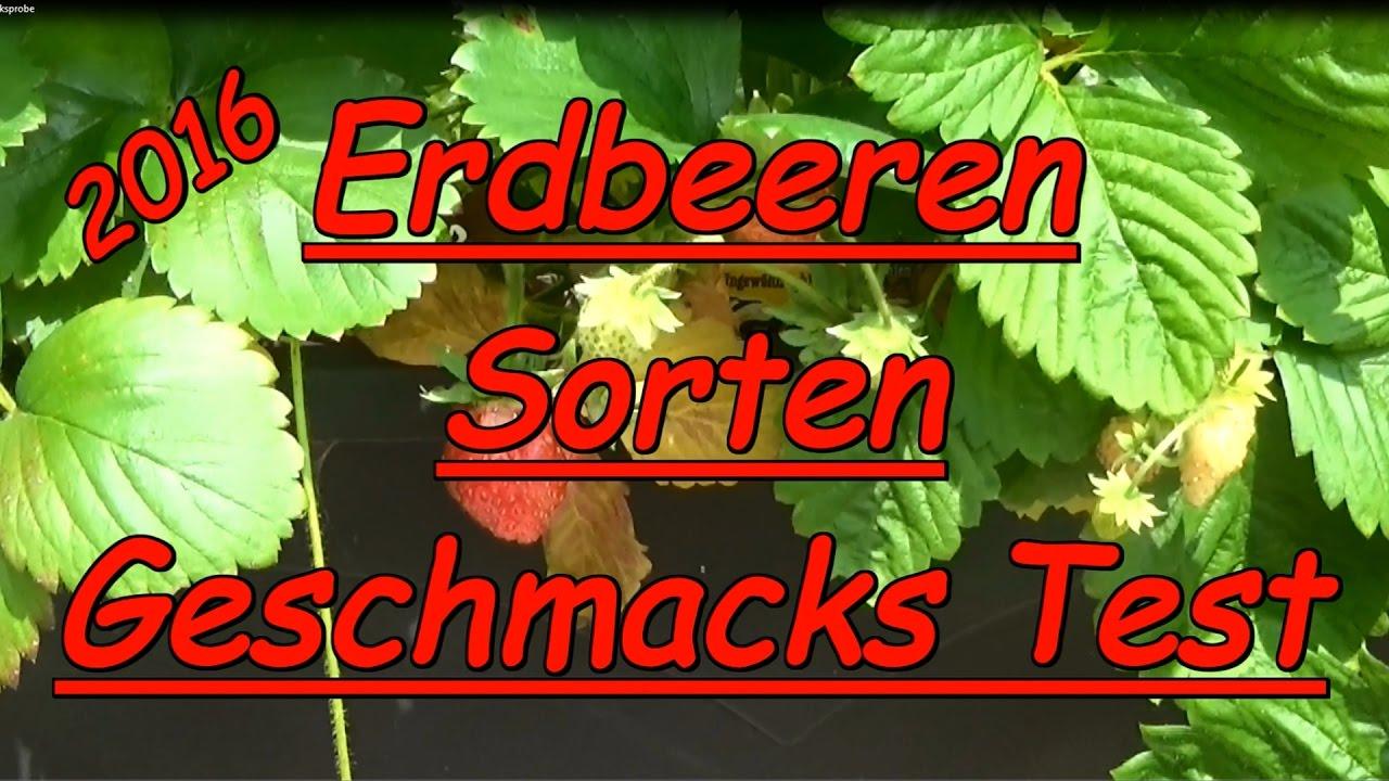 Erdbeeren Sorten Test Geschmackstest Meraldo Weisse Fee Waldfee