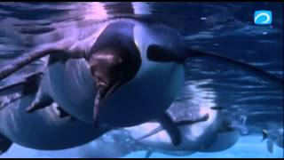 Документальный фильм - Антарктида.Подводный мир