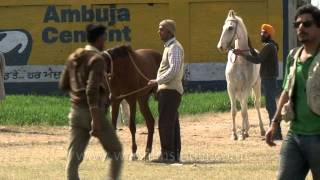 Horse parade at the rural olympics - kila raipur