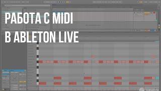 Работа с MIDI в Ableton live