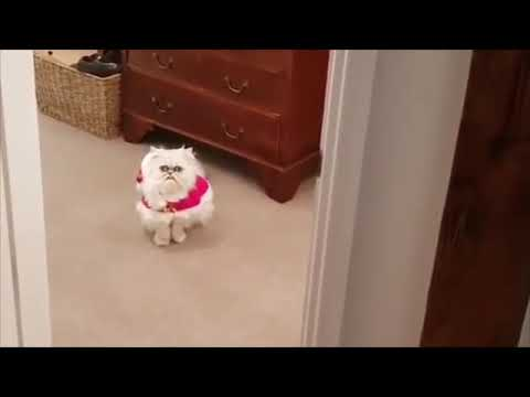 Attack of the xmas cat