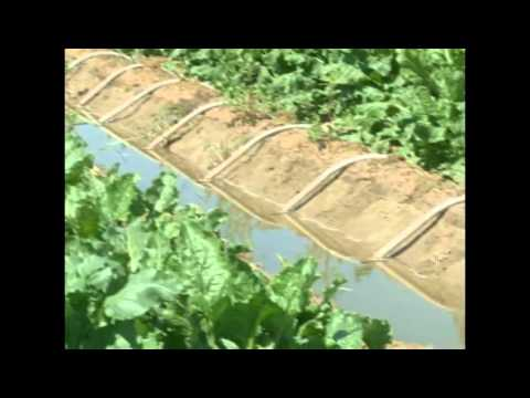 Flood Irrigation