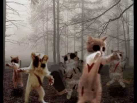 zombie cats attack stay tuned youtube