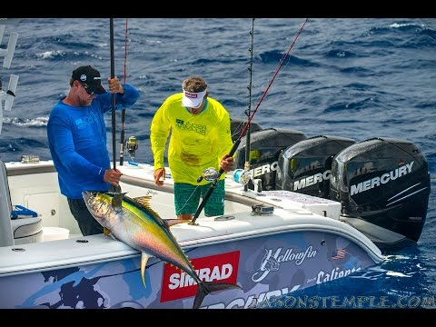 "Into The Blue: ""The Stena Forth: Yellowfin Tuna Pt 1"" 2015 : Season 7 Episode 2"