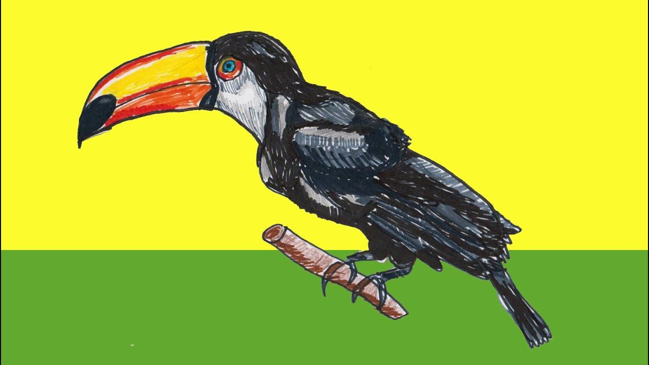Нарисованные птицы картинки для детей | 720x1280
