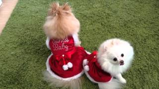 Puppy Holiday Fashion Show