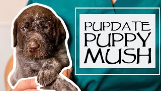 Caring For A New Litter  Weaning Puppies  How To Make Puppy Mush  Just Over 3 Weeks Old