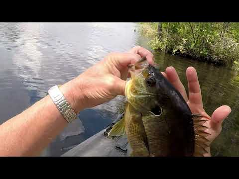 Catching Bream,warmouth And Shellcracker With Beetle Spin.