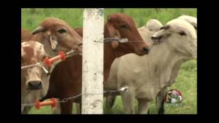 Perfil Agropecuario Domingo 02 Julio - Sr. Carlos Rumbos: Embrioven/Agrolasa