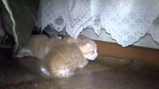 Котята ищут хозяев