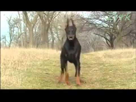 Najbolji psi..mp4