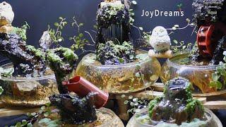 실내 수경재배 공기정화 식물 셋팅완료!