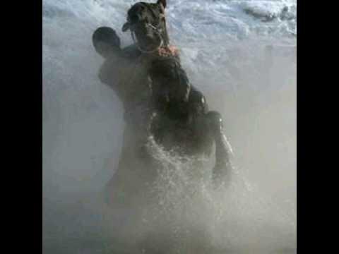 ahmet fatih yavuz - sahipsiz atlar