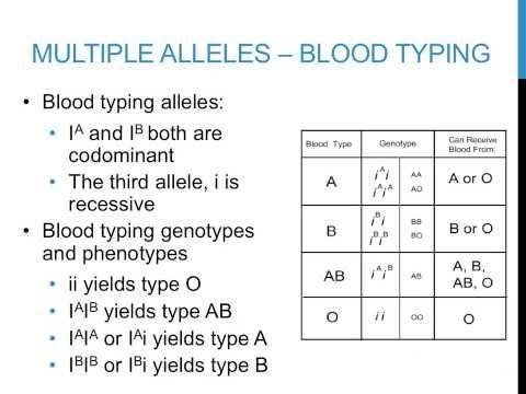 Worksheets Multiple Alleles Worksheet punnett square practice problems multiple alleles youtube