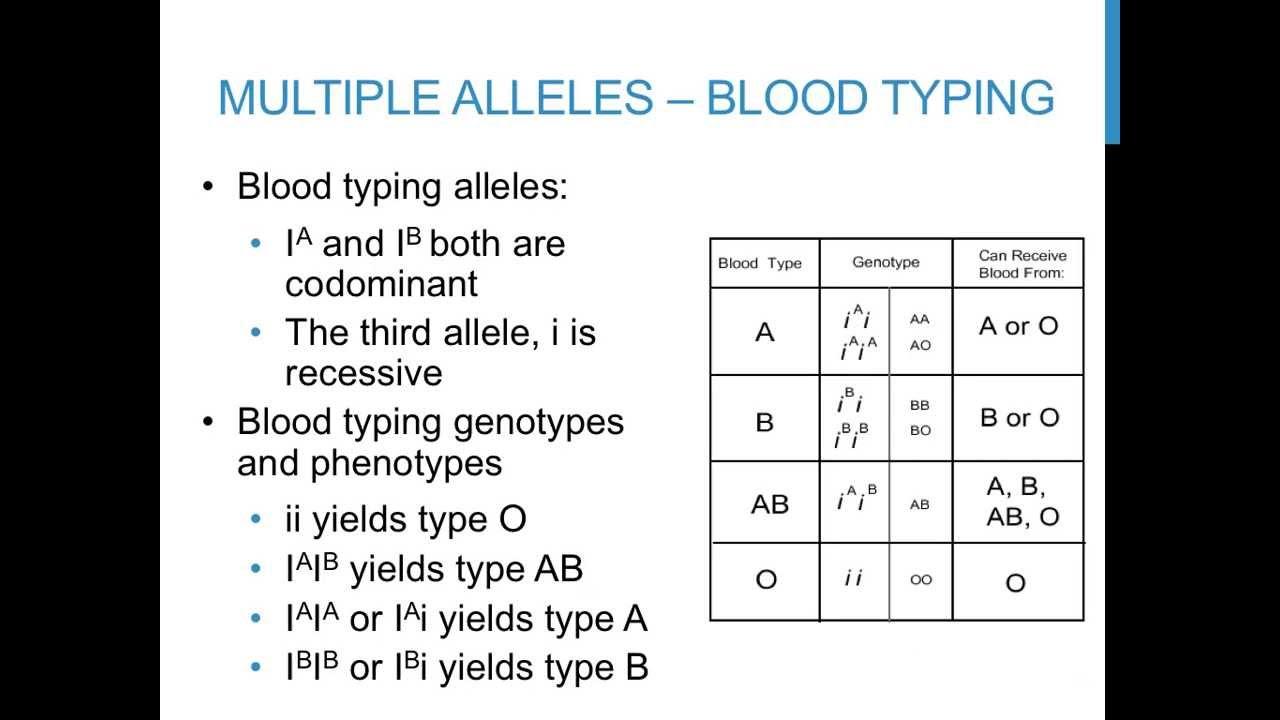 Punnett square practice problems (multiple alleles) - YouTube