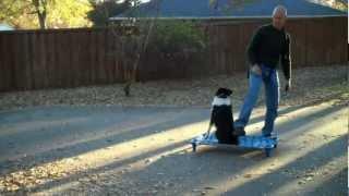Brigsy Doing Off Leash Work - Redeeming Dogs