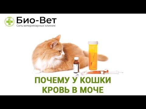 Вопрос: Кот не мочится уже третьи сутки, что может быть причиной и что делать?