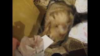 Кошка просит валерьянку (кошка и валерьянка)