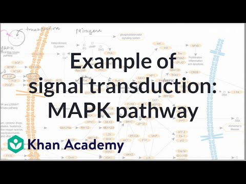 Example Of Signal Transduction Pathway