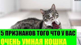 5 признаков того что у Вас очень умная кошка