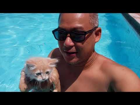 Sven can swim CATS CAN SWIM!!