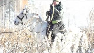 Как приучить лошадь к выстрелам. Лошади Видео 2016 hunting horse