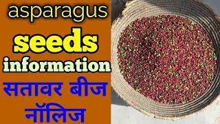सतावर बीज नॉलिज||asparagus in hindi ||shatavari seeds  informetion thumbnail