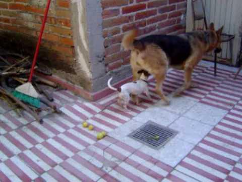De perro vi - 3 part 4