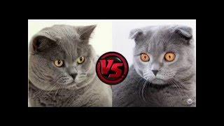 Приучить кошку к унитазу ПРОСТО !!!