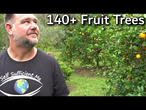 EVERY Fruit Tree We're Growing Full Garden Tour