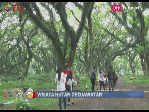 Rasakan Suasana Seperti Di Film Fiksi, Yuk Ke Hutan De Djawatan Di Banyuwangi - BIP 27/12