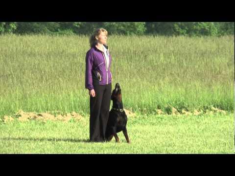 Eiko v. Landgraf AWDF 2012 Obedience