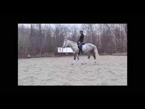 Dresden Silver - '06 Trakehner Mare for Sale
