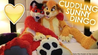 EXCLUSIVE FURRY INTERVIEW with SUNNY DINGO