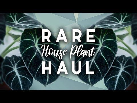 Rare Plant Haul! | 7 New Houseplants! | Spring 2019