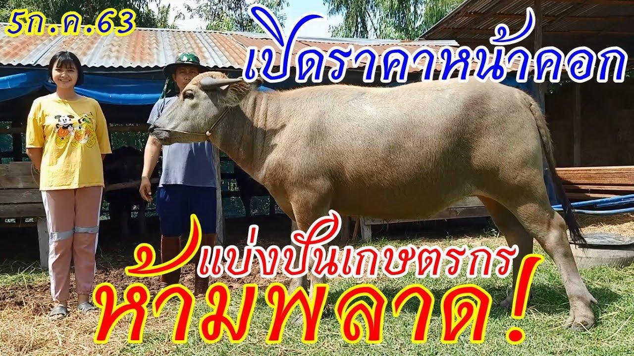 เปิดราคาควาย แบ่งปันเกษตร #ควายงาม #ควายไทย สายเพชรอุดร มีไว้อุ่นใจแน่นอน อ.นาเชือก มหาสารคาม