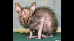 Top 10 der hässlichsten Tiere der Welt