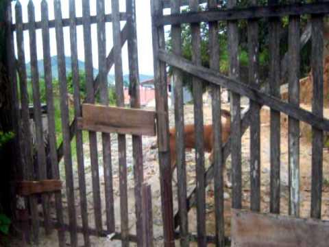 Nick abri o Portão e entra em kasa..MOV