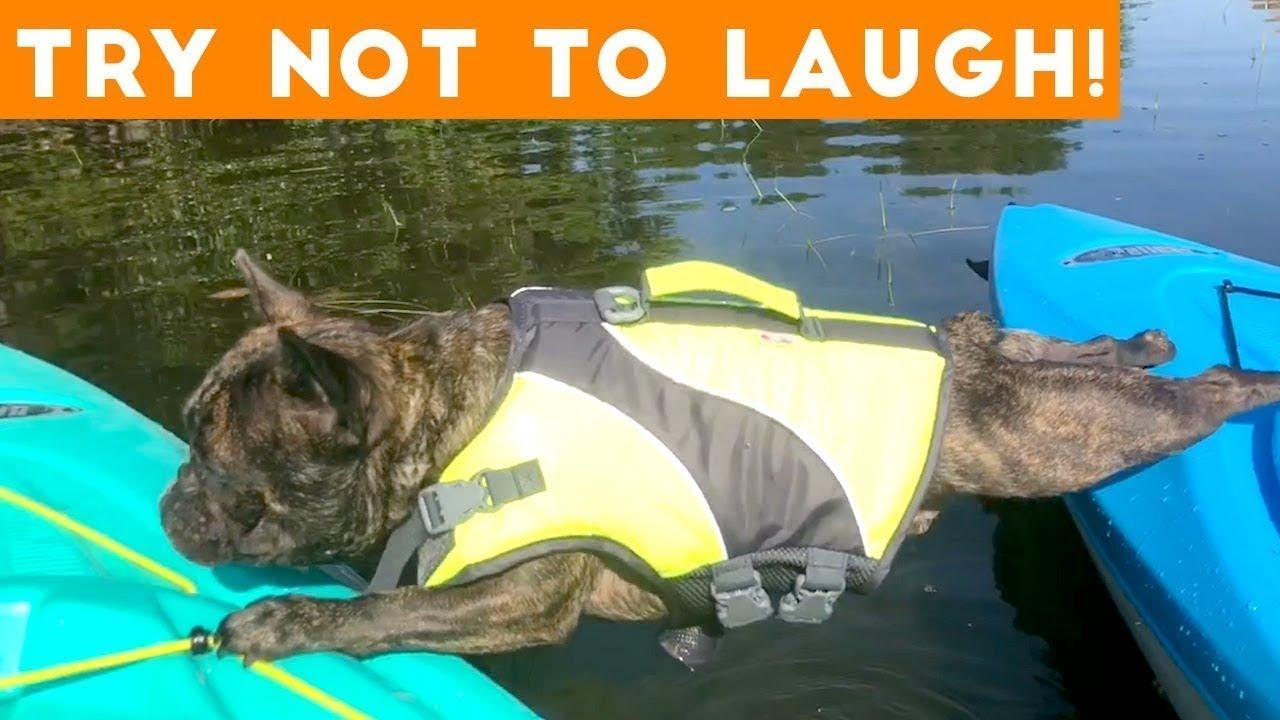 [60 MIN] Cutest Pet Videos! | Best of the WEEK September 2018