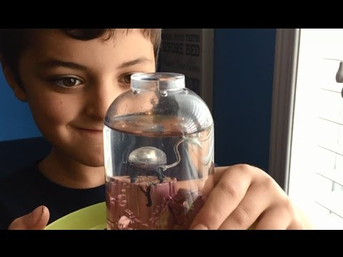 Damage Control - Ethan and his Sea Monkeys