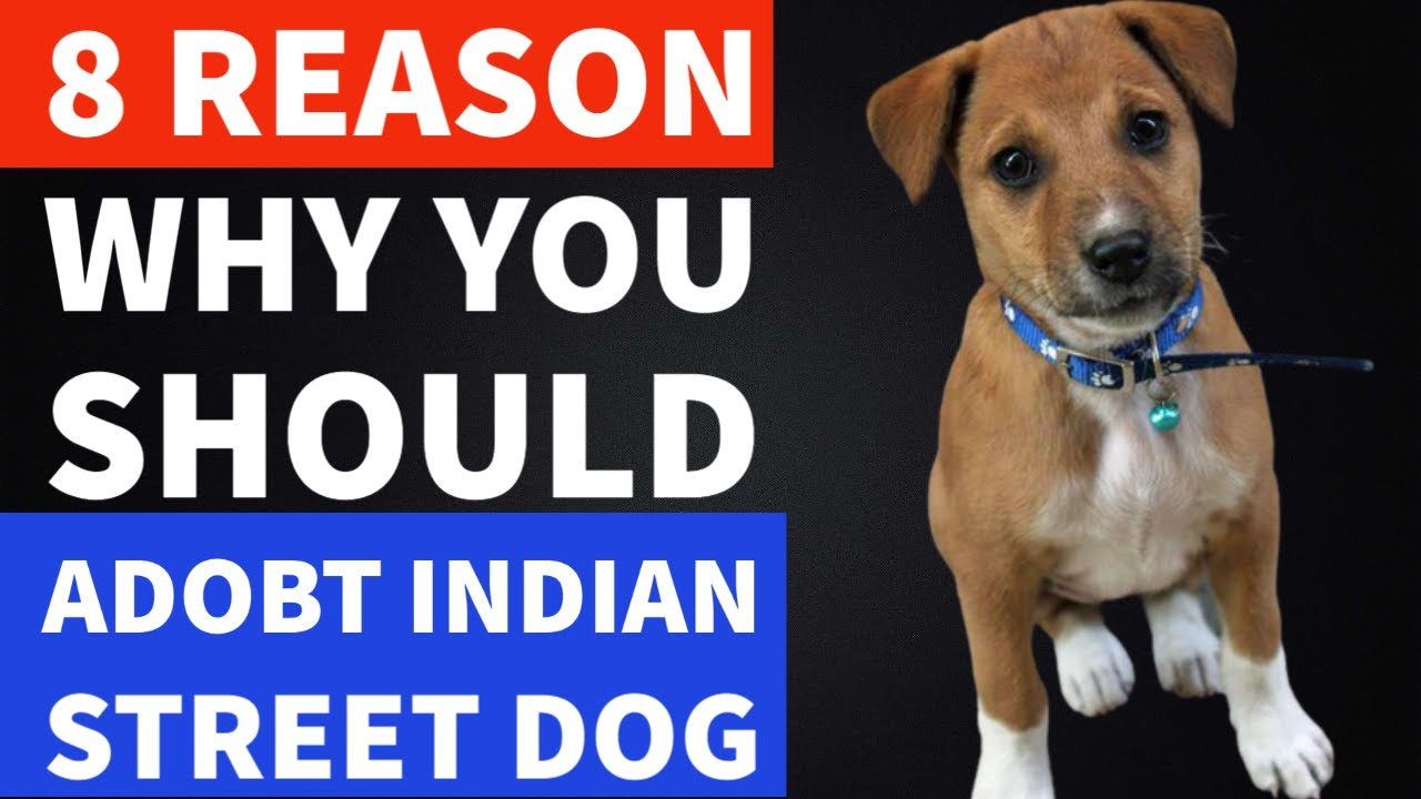 8 Reasons Why You Should Adopt Indian Street Dog | Indian Dogs | TUC