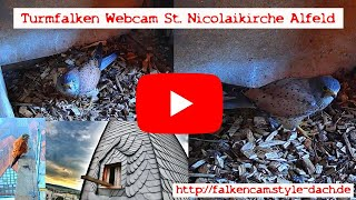 Preview of stream Nistkasten Webcam auf der St. Nicolai Kirche Alfeld