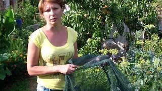 Посадка  огурцов и пекинской капусты в июле