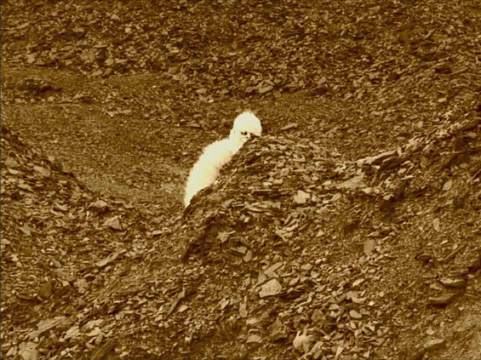 mars conspiracy nasa - photo #17